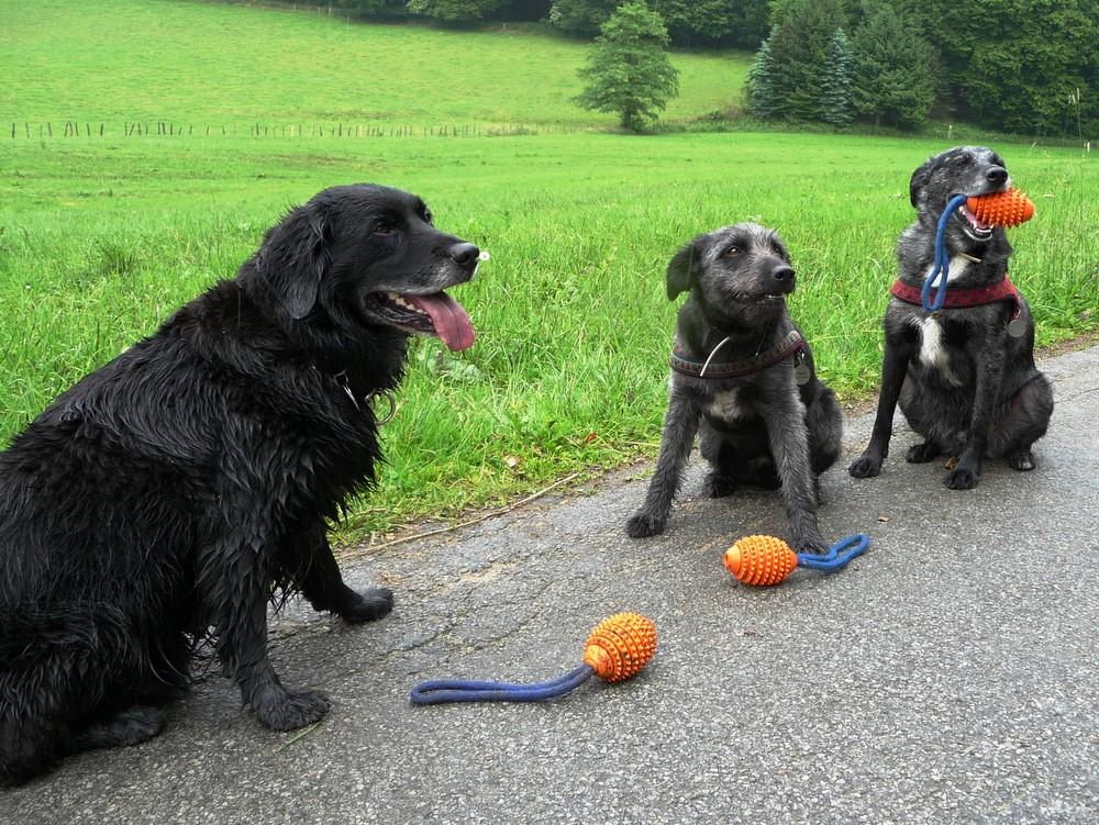 Ruppert, Felix und Linus