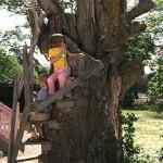 Limonadenbaum